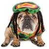Rasta Imposta Dog Pet Costumes (XXL)