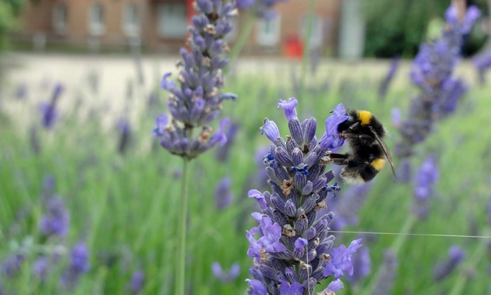 Build a Bumble Bee Box with an Urban Beekeeper and Agricultural Expert - Mt. Baker: Hear the history of native pollinators before building your own bumblebee nesting box to take home with you