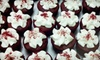Mrs. A Cupcakes @ The Pickwick - Park Ridge: 6 or 12 Specialty Cupcakes or $10 for $20 Toward a Custom Cake at Mrs. A's Cupcakes & Cookies