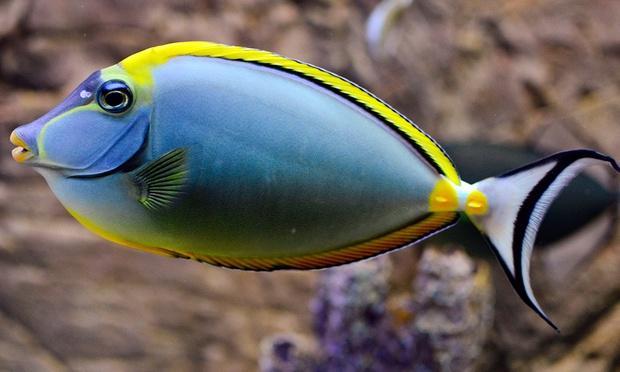 Blue_Coral_-_2-1000x600.jpg