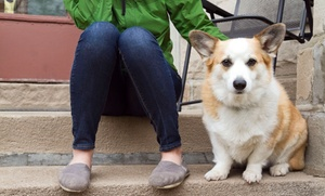 Teezy Walks Reston: One, Five, or Ten20-Minute Dog Walks from Teezy Walks Reston (Up to 49% Off)