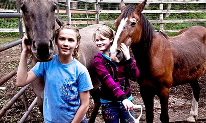 Punk Rock Pony - Shadow Lake: Two or Four Horseback-Riding Lessons at Punk Rock Pony (Up to 55% Off)