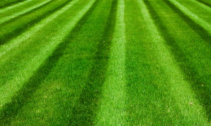Creative Lawncare - Toronto (GTA): C$79 for a Lawn Clean-Up Package from Creative Lawncare (C$159 Value)