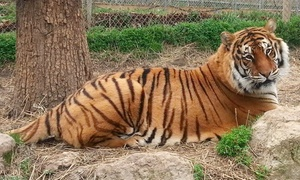 Riverside Wildlife Center: Guided Educational Wildlife Tour for Two, Three, or Four at Riverside Wildlife Center (Up to 50% Off)