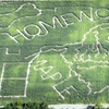 Up to Half Off Corn Maze and Hayride for 4 or 8