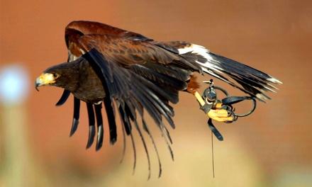 Workshop met roofvogels voor 2, 4 of 8 personen bij Valkerij de Kaproen (vanaf € 150)