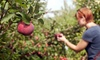 Apple Ridge Orchards - Warwick: Gold Rush Apple Picking Outing for Two or Four with Hayride and Cider at Apple Ridge Orchards (Up to 44% Off)