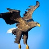 Full-Day Eagle Experience