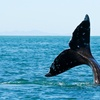 Up to 47% Off a Whale-Watching Cruise for Two in Long Beach