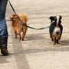 56% Off Dog Walks