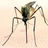 50% Off 100% Organic Mosquito Yard Spray