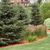 50% Off Landscaping Package
