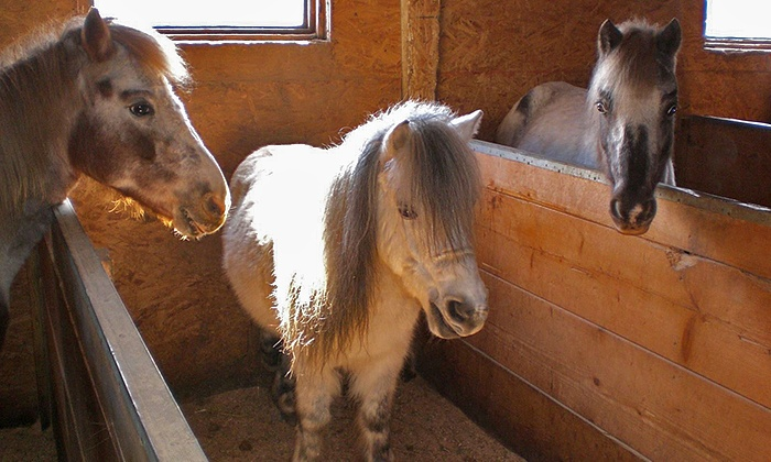 Sarah's Stables, INC - Little Palestine: Petting Zoo Visit and Barn Tour for One, Two, or Four Children at Sarah's Stables, INC (Up to 56% Off)