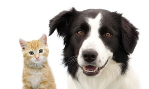 Sully Animal Hospital: $30 for Microchipping for a Dog or Cat at Sully Animal Hospital ($60 Value)