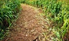 Odom Farming Co, INc - Fork: Corn Maze and Hay Ride for Two, Four, or Six with Complimentary Pumpkin at Odom Farming Co, Inc (Up to 58% Off)