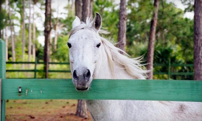 Ace of Hearts Ranch - Titusville: $30 for a One-Hour Trail Ride for Two from Ace of Hearts Ranch ($60 Value)
