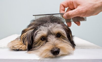 Dog Grooming Service for a Small, Medium or Large Dog at My Best Friend Dog Grooming