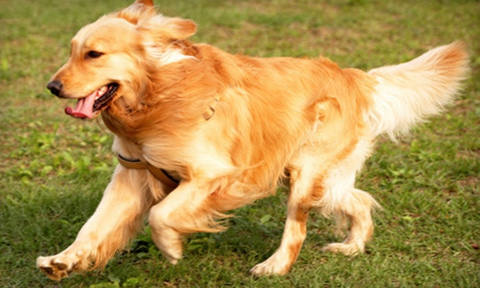 AnimalSense - Multiple Locations: $89 for Six-Week Group Training Class for Dogs at AnimalSense ($195 Value)