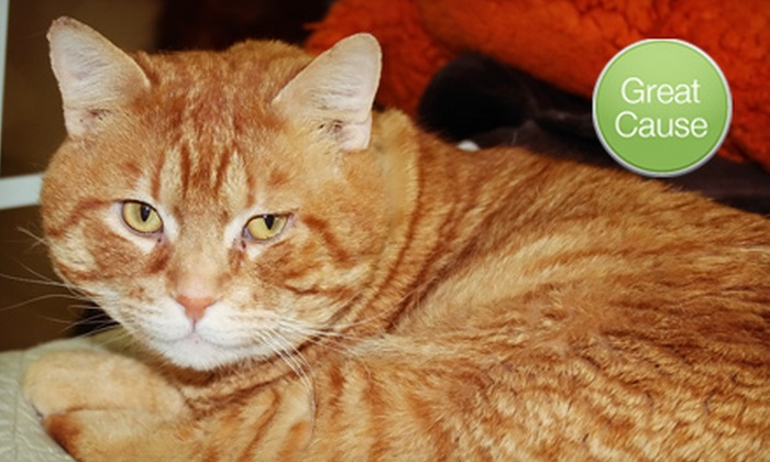 Purrfect Pals: $10 Donation to Spay or Neuter Cats