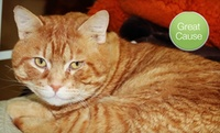 GROUPON: $10 Donation to Spay or Neuter Cats Purrfect Pals