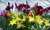 Lakeshore Garden Centre - North Industrial: Flowers, Shrubs, and Trees at Lakeshore Garden Centre (Up to 52% Off). Two Options Available.