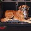 Deluxe Vehicle Cargo Cover for Pets with Fleece