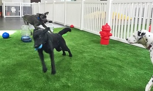 The Hounds Club: Up to 53% Off Doggy Day Care  at The Hounds Club