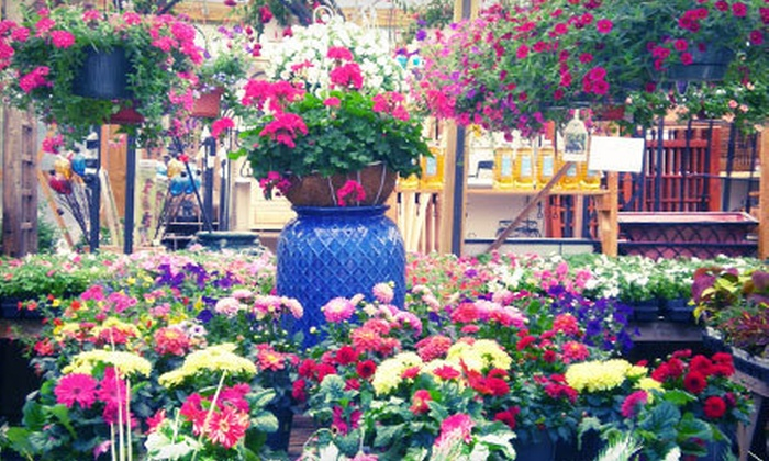 Campbell & Ferrara Outdoor Living - Annandale: $15 for $30 for Plants, Flowers, and Gardening Accessories at Campbell & Ferrara Outdoor Living in Alexandria