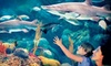 The Florida Aquarium - Downtown Tampa: Admission for Two or Four to Summer Fun Nights at The Florida Aquarium (Up to Half Off)