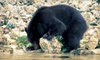 Ocean Outfitters - Tofino: Bear-Watching Tour for One, Two, or Four from Ocean Outfitters in Tofino (Up to 55% Off)