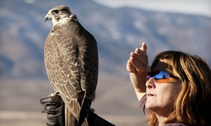 West Coast Falconry - Washington Trail: Owl Encounter for One or Two or Falconry Lesson for Two at West Coast Falconry in Marysville (Up to 55% Off)