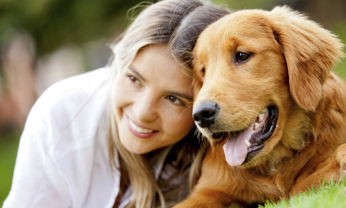 Online Academies: $19 for  One Animal Psychology Certification Course from Online Academies ($415.99 Value)