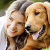 95% Off an Online Animal Psychology Course