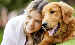 Queens Animal Hospital: Checkup or Comprehensive Health Assessment for a Dog or Cat at Queens Animal Hospital (Up to 87% Off)