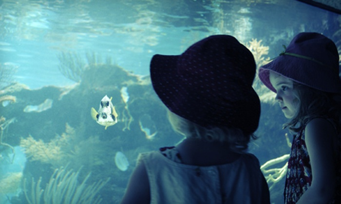 World Aquarium - City Museum: Half-Day Camp for One or Two or Full-Day Scientist in Action Camp for One or Two at World Aquarium (Up to 63% Off)