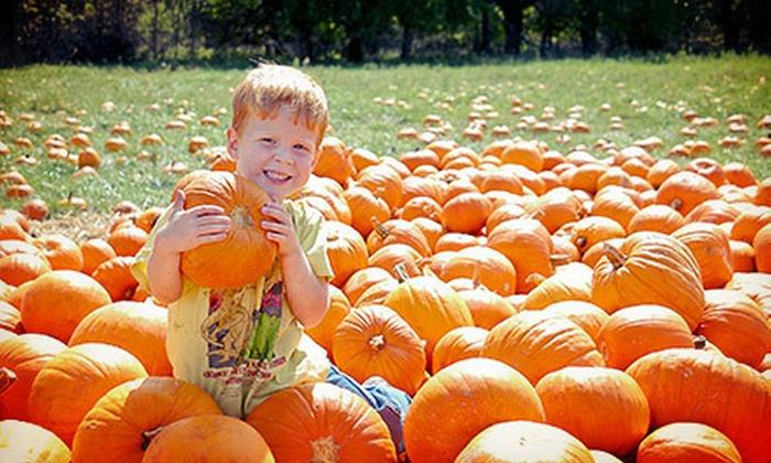 KC Pumpkin Patch and Corn Maze - Gardner: $12 for One Single-Person Season Pass to KC Pumpkin Patch and T-Bones Corn Maze ($25 Value)