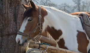 $22 For $40 Worth Of Horseback Riding — Legacy Farm And Stable