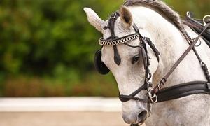 Circolo Ippico La Corte Asd: 3 o 5 lezioni di equitazione con istruttori federali FISE da 24,90 €