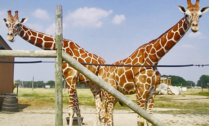 image for Admission for One, or an Annual Family Pass for Up to Four at African Safari Wildlife Park (Up to 54% Off)