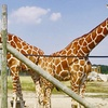 Up to 64% Off a Safari-Park Visit or Membership