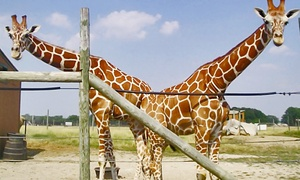 African Safari Wildlife Park: Admission for One, or an Annual Family Pass for Up to Four at African Safari Wildlife Park (Up to 64% Off)