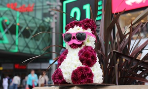 Florentin:  £80 to Spend on Misha the Flower Bear at Florentin