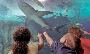 Newport Aquarium: Annual Pass or Entry to Mermaid and Pirate Family Ball at Newport Aquarium