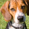 Up to 53% Off Doggy Day Care at Camp Bow Wow
