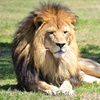 Lion Country Safari – Up to 48% Off a Park Visit