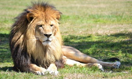 $21 for a Safari-Park Visit with Parking at Lion Country Safari (Up to $40 Value)