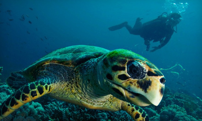 PCH Scuba - Burbank: $399 for Two-Weekend Scuba Certification and Catalina Getaway at PCH Scuba ($949 Value)