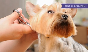 Ginger's Getaway : Grooming Packages for a Small, Medium, or Large Dog at Ginger's Getaway (Up to 50% Off)