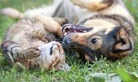 Higiene bucal para una o dos mascotas (perro o gato) desde 89 € en LArc de LEixample