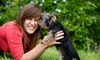 Boss The Pet Connection - Multiple Locations: Grooming Packages for three Sizes of Dogs at Boss The Pet Connection (Up to 58% Off)